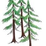 Timber North.JPG
